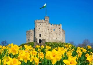 cardiff castle wales daffodils